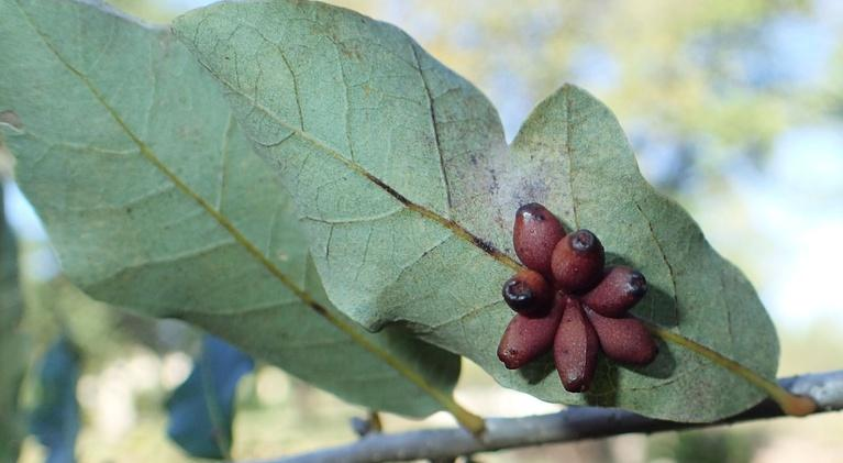 Central Texas Gardener: Best Tips for Growing Fruit Trees