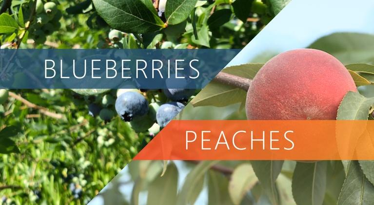 The Local Feed: Blueberries | Peaches