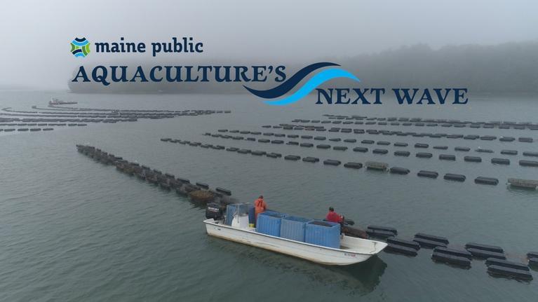Maine Public News: Aquaculture's Next Wave