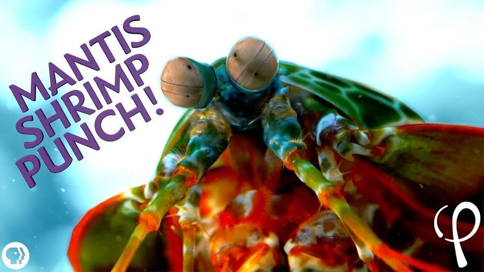Mantis Shrimp Punch at 40,000 fps! - Cavitation Physics image