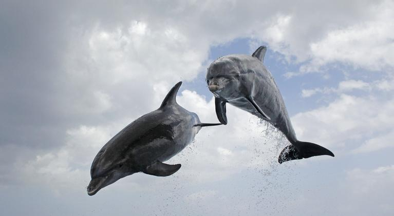 Nature: Dolphins: Spy in the Pod | Part 2