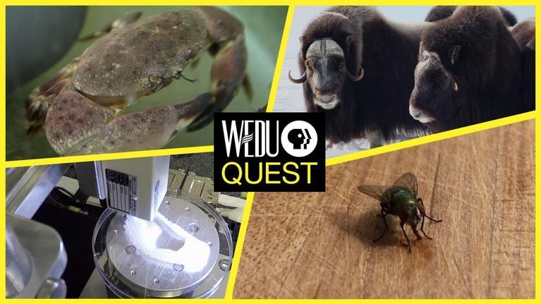 WEDU Quest: Episode 401