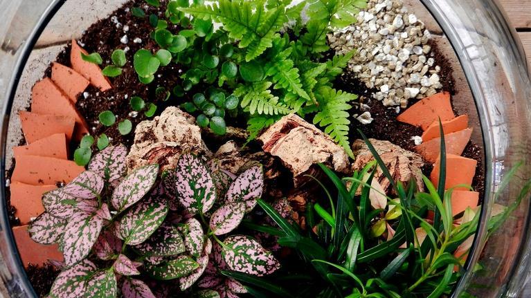 J Schwanke's Life In Bloom: Terrariums: Life Under Glass