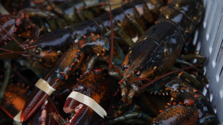 Assignment: Maine: Lobster at Luke's on Tenants Harbor