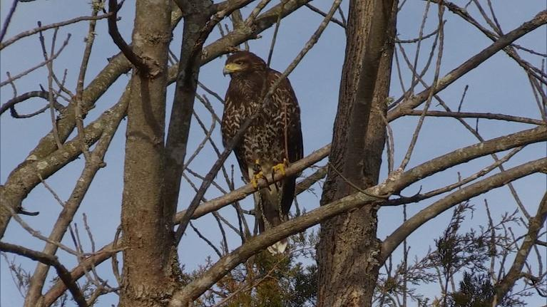 Kentucky Afield: Predators of the Sky; Boating Season; Outdoorswoman Workshop