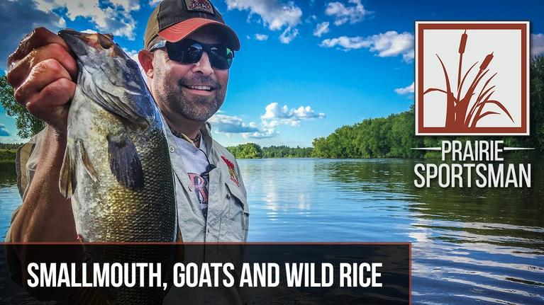 Prairie Sportsman: S9 Ep3: Smallmouth, Goats and Wild Rice