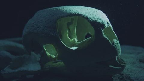 Big Pacific -- Turtle Graveyard