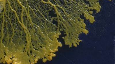 NOVA | Secret Mind of Slime