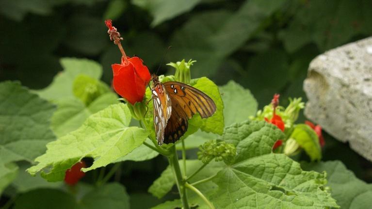 Central Texas Gardener: Native plant and meadow design
