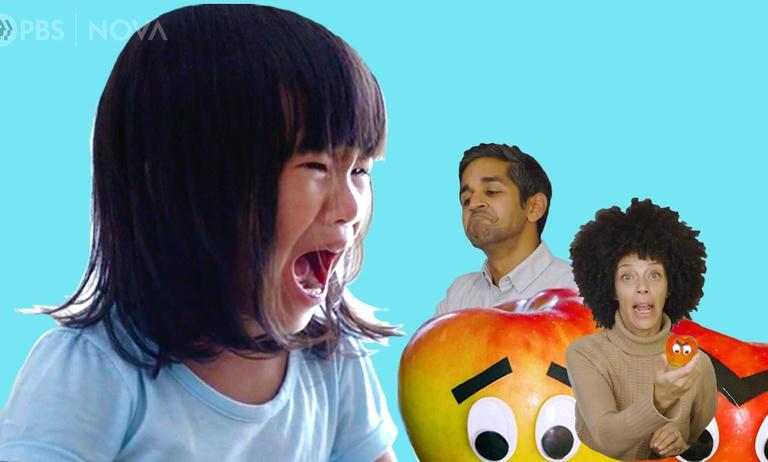 Why Toddlers Throw Tantrums