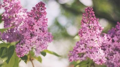 Track a Lilac Crash Course - Spanish
