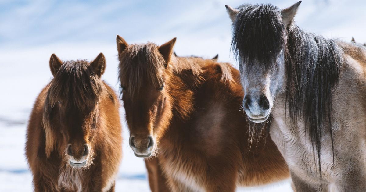 Equus Quot Story Of The Horse Episode 2 Chasing The Wind
