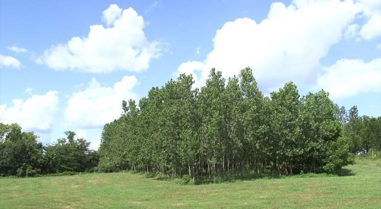 Show-Me Ag: The Center for Agroforestry