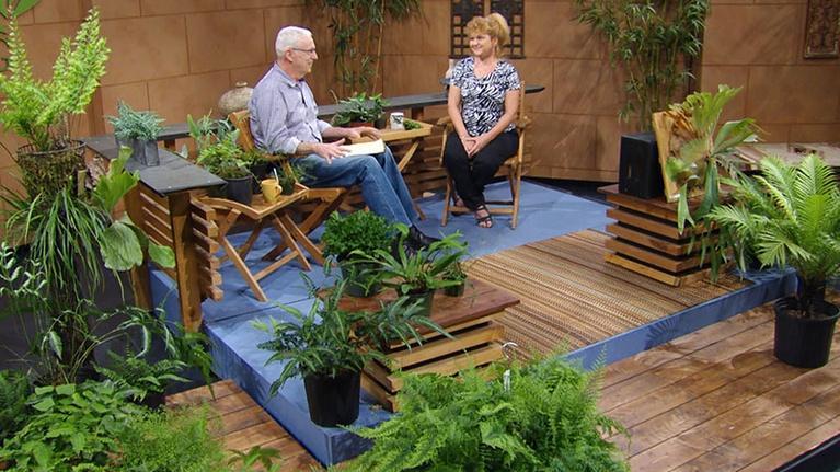 Central Texas Gardener: Fantastic Ferns for Indoors & Garden