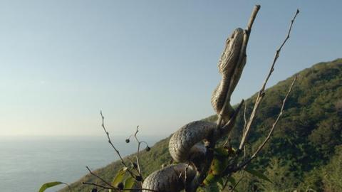 Big Pacific -- Snake Island