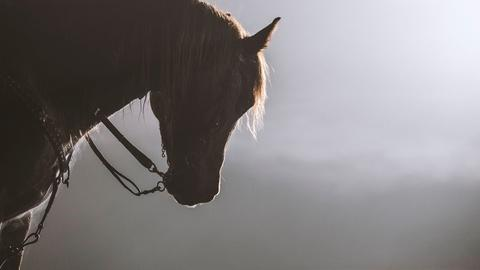 """Equus """"Story of the Horse"""" 