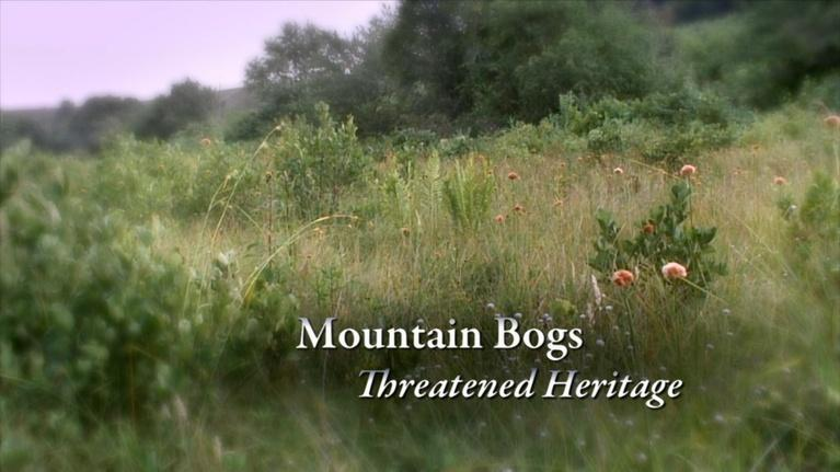 Expeditions with Patrick McMillan: Mountain Bogs – Threatened Heritage