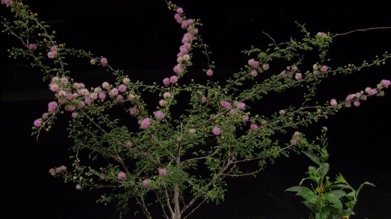 Central Texas Gardener: Pollinator-Friendly Plants in Deer Country