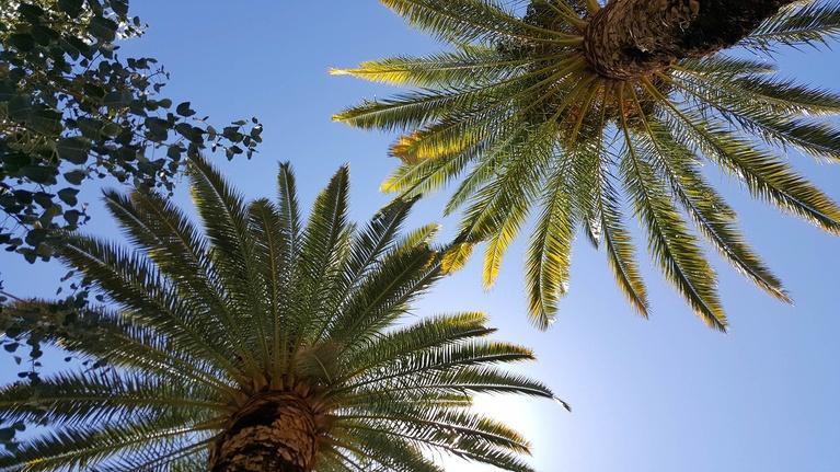 The Desert Speaks: Palms in the Desert