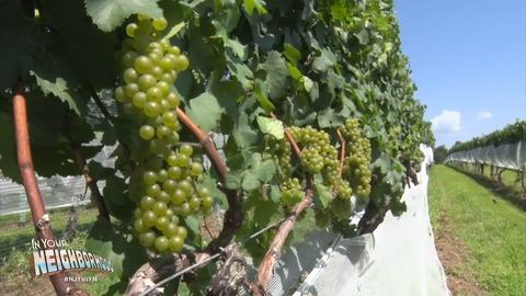 Fish on the line and grapes on the vine draw tourists to NJ