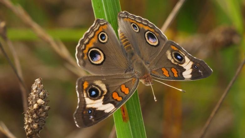 Season 4 Ep. 2: Butterflies – Bringing Butterflies Home! logo