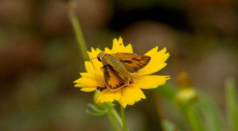 Virginia Home Grown: Attracting Butterflies, Classic Gardening Practices (#1905)
