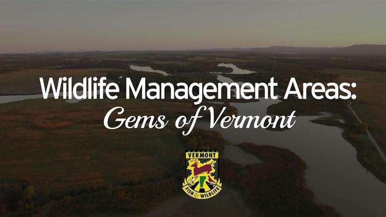 Vermont PBS Specials: Wildlife Management Areas - Gems of Vermont