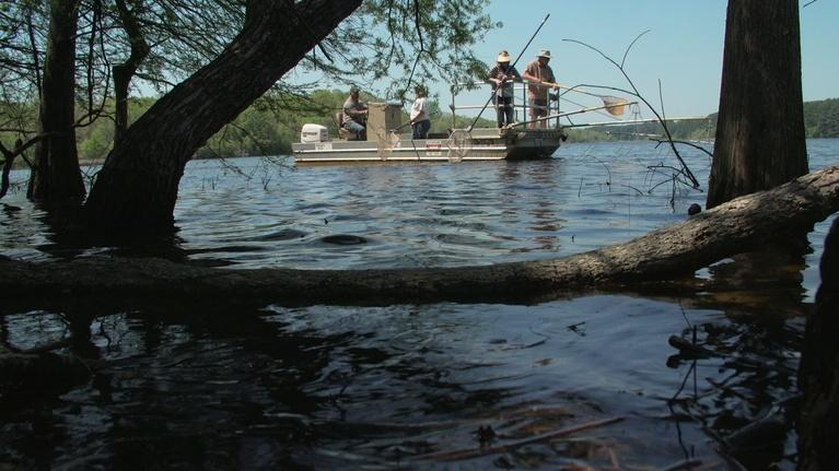 Texas Parks and Wildlife: Fishing Fame, Hardwood Heaven, LBJ's Park