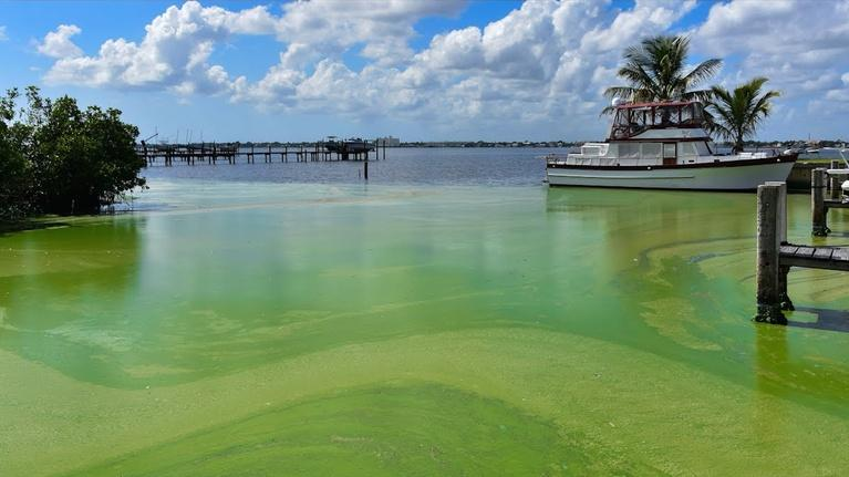 Changing Seas: Toxic Algae: Complex Sources and Solutions