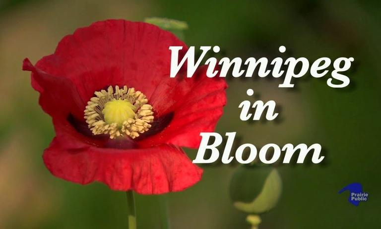 Winnipeg In Bloom