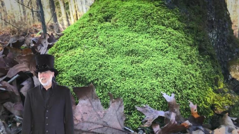 Steve Trash Science: PLANTS/WICKED WAVES OF SOUND