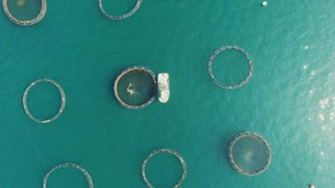 Earth Focus -- Proposed Fish Farms Seek to Counteract U.S. Seafood Imports