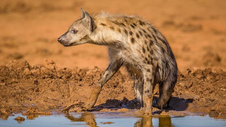 Life at the Waterhole Image