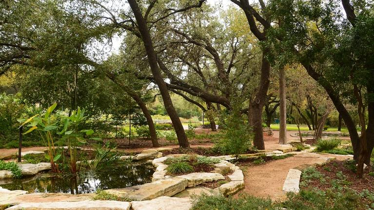 """Central Texas Gardener: What's Behind a """"Green Thumb?"""""""