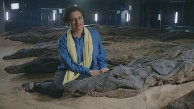 Sacred Crocodile Mummies Reveal the Climate of Ancient Egypt