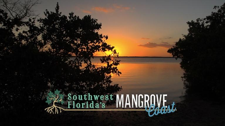 WGCU Presents: Southwest Florida's Mangrove Coast