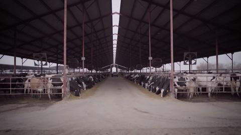 Earth Focus -- Dairy Alternatives Preview