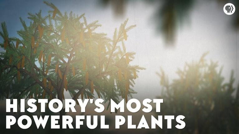 Eons: History's Most Powerful Plants