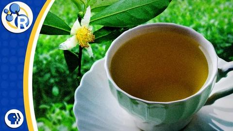 Reactions -- White, Green, Black, and Oolong Tea: What's the Difference?