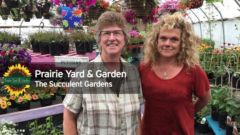 Prairie Yard & Garden: Creating Succulent Gardens