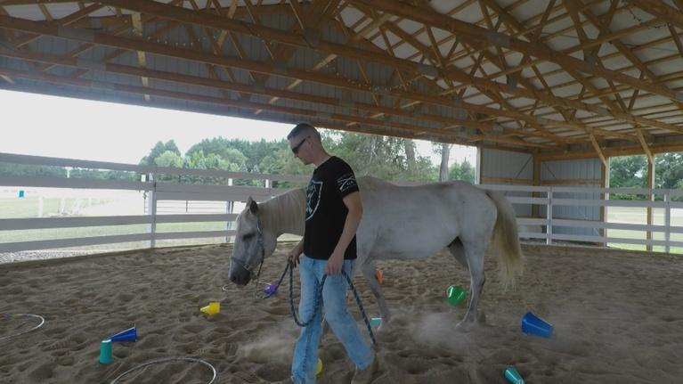 Wisconsin Life: Veteran Horse Therapy