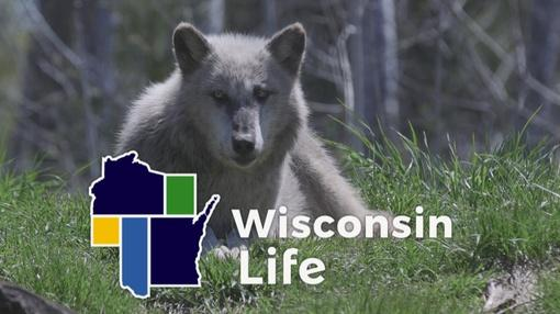 Wisconsin Life : Fortitude