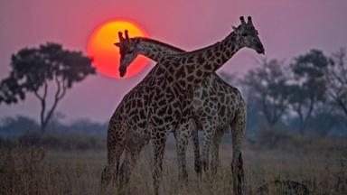 Okavango: River of Dreams - Inferno - Preview