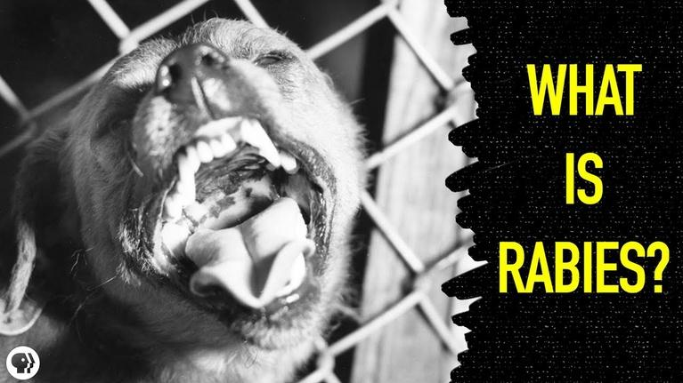 Gross Science: What Happens When You Get Rabies?