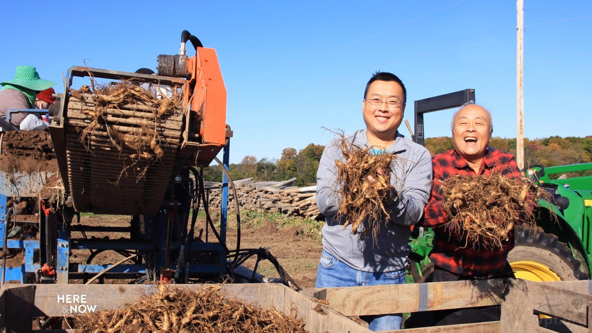 Chinese Trade Disputes Impact Wisconsin Ginseng