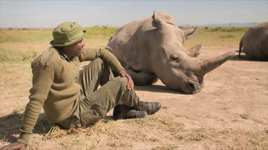 The Last Two White Rhinos