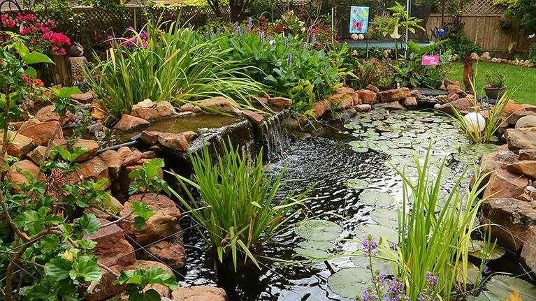 Central Texas Gardener: Flashy Plants for Splashy Summer