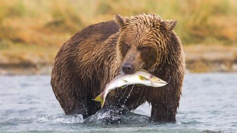 Wild Alaska Live -- Episode 1
