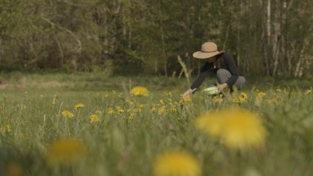 The Forager | Backyard Nature