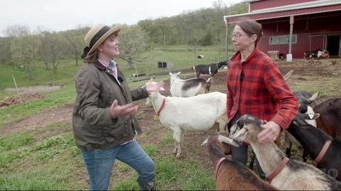 Around the Farm Table -- Goats in Wisconsin
